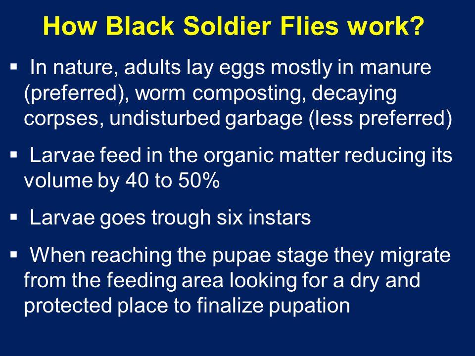 How Black Soldier Flies work