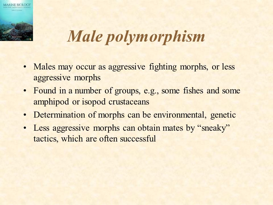 Male polymorphism Males may occur as aggressive fighting morphs, or less aggressive morphs.