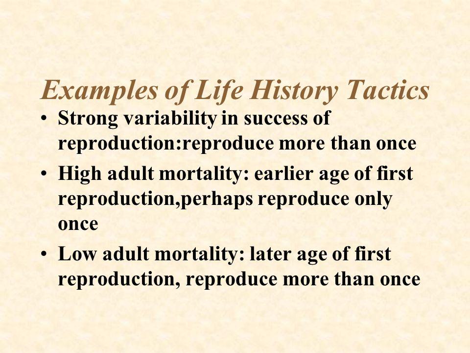 Examples of Life History Tactics