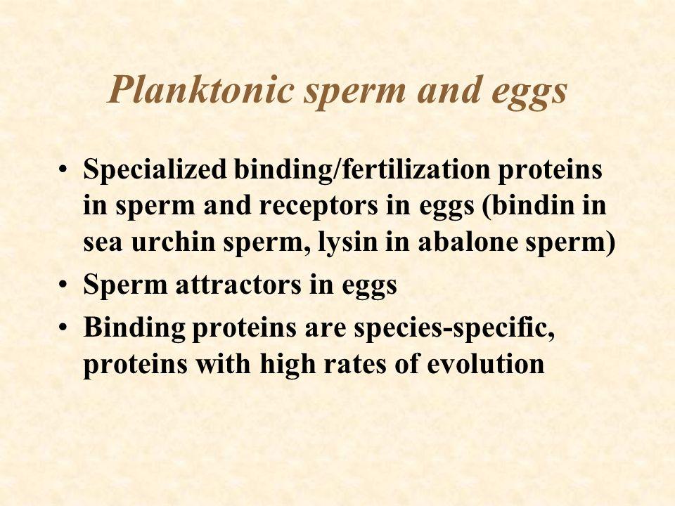 Planktonic sperm and eggs