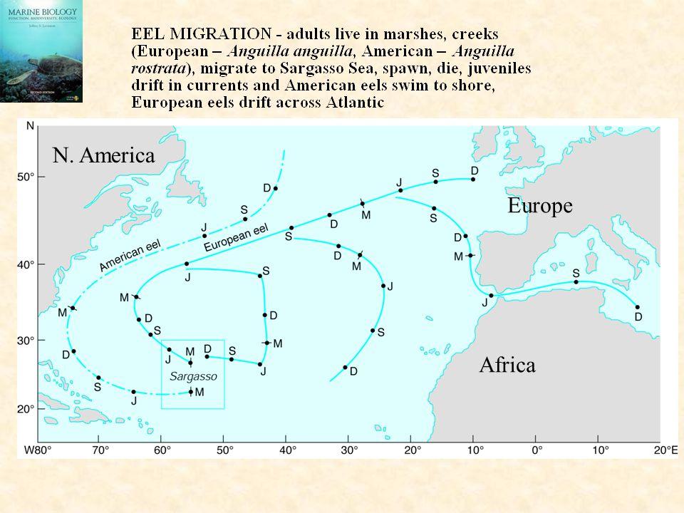 N. America Europe Africa