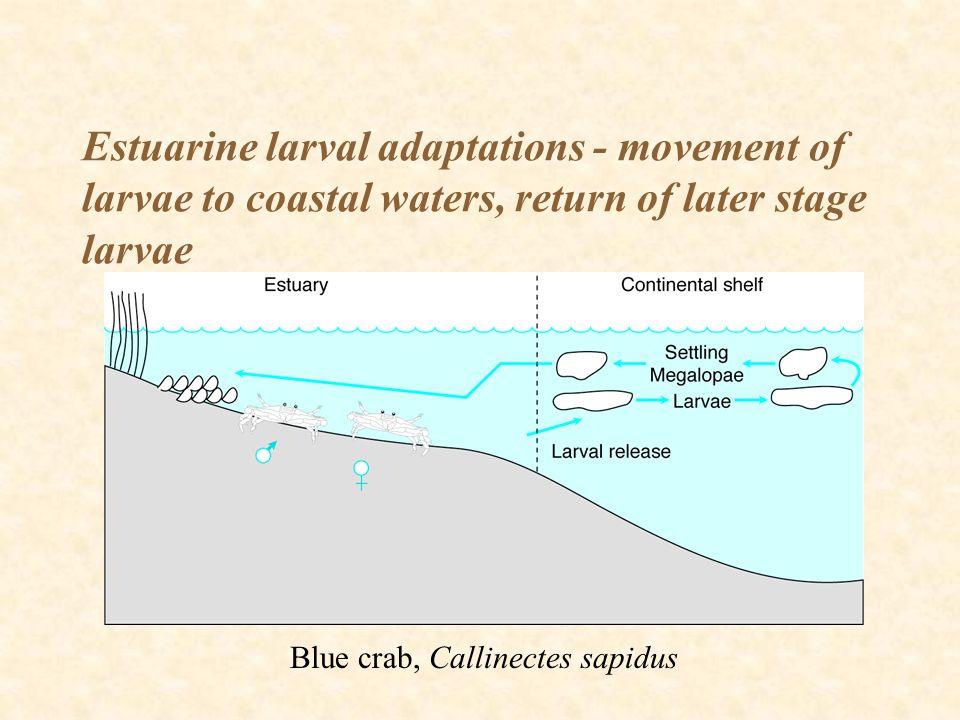 Estuarine larval adaptations - movement of larvae to coastal waters, return of later stage larvae