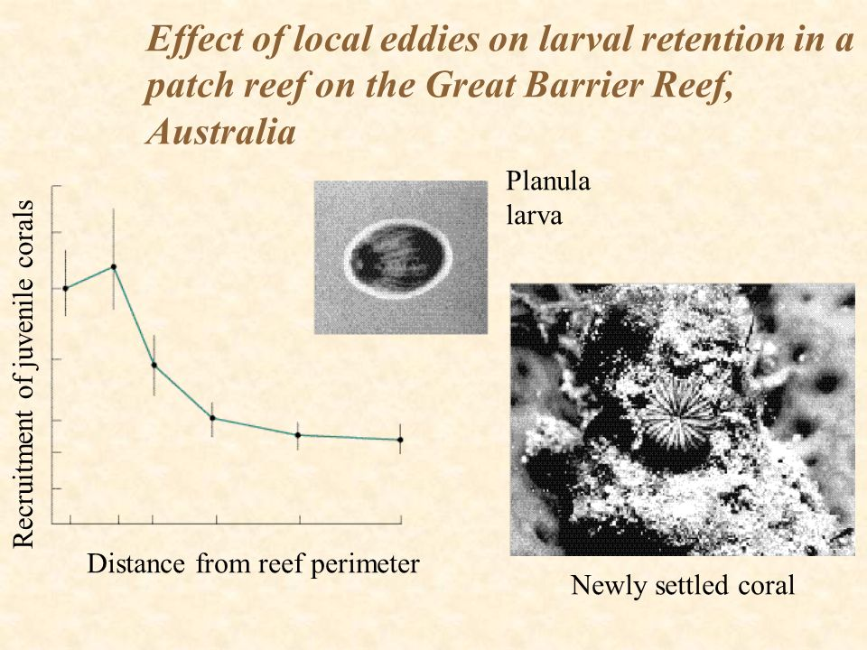 Effect of local eddies on larval retention in a patch reef on the Great Barrier Reef, Australia