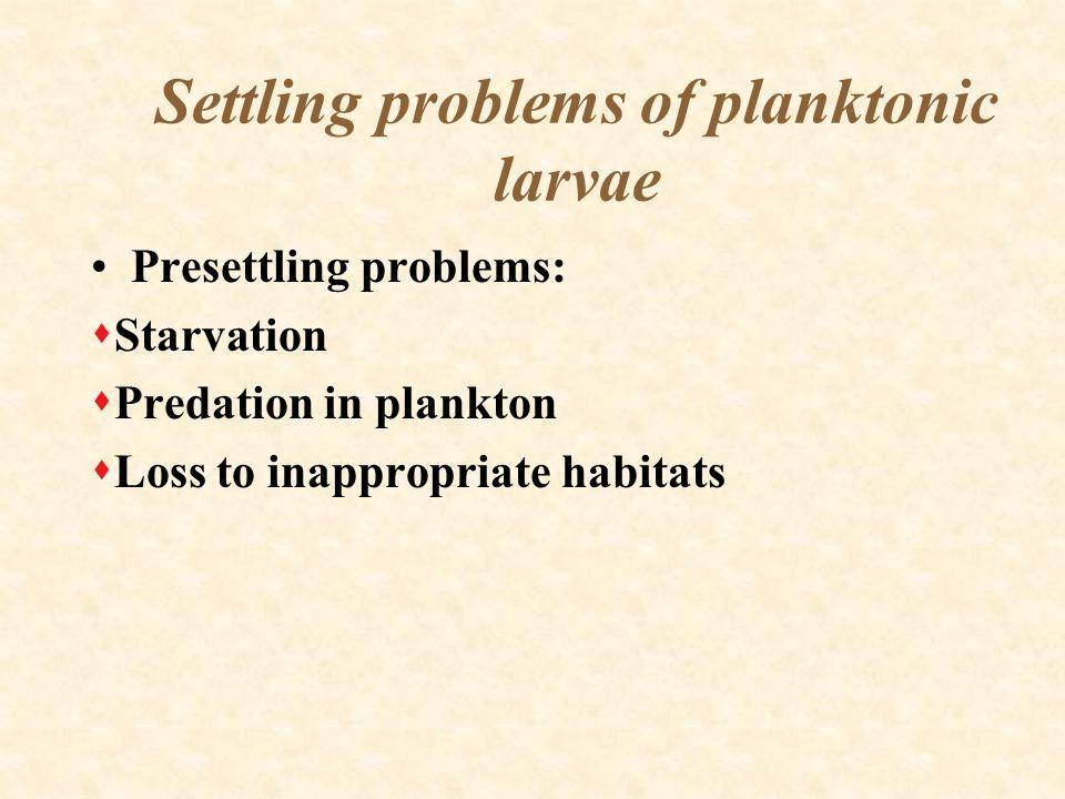 Settling problems of planktonic larvae