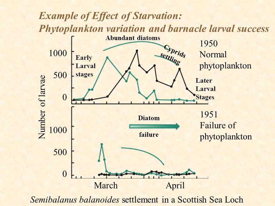 Example of Effect of Starvation: