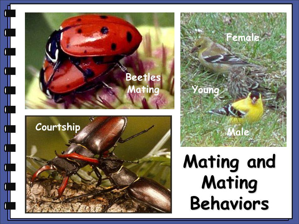 Mating and Mating Behaviors