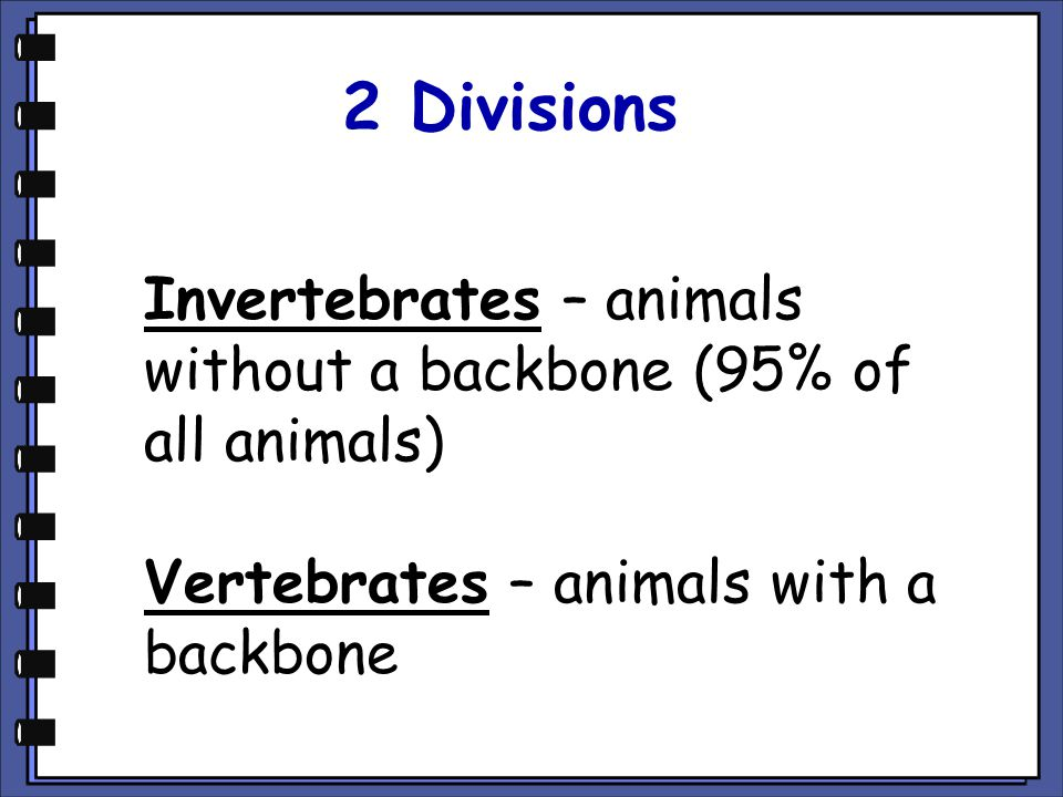 2 Divisions Invertebrates – animals without a backbone (95% of all animals) Vertebrates – animals with a backbone.