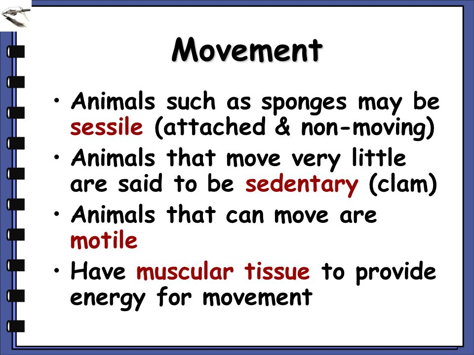 Movement Animals such as sponges may be sessile (attached & non-moving) Animals that move very little are said to be sedentary (clam)