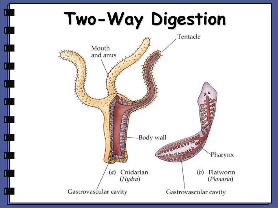 Two-Way Digestion