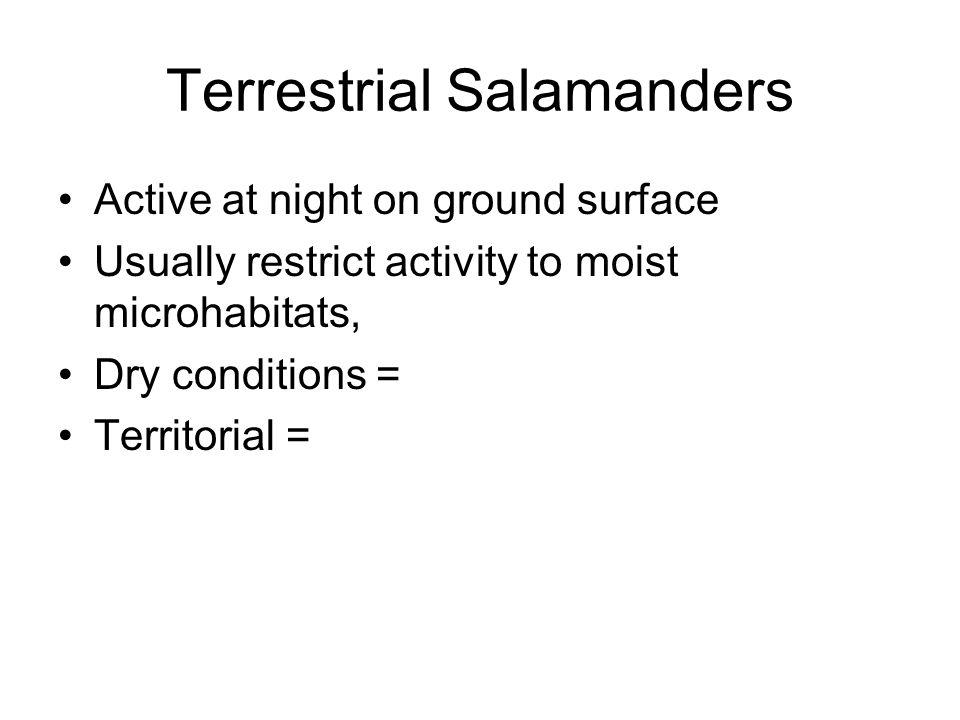 Terrestrial Salamanders