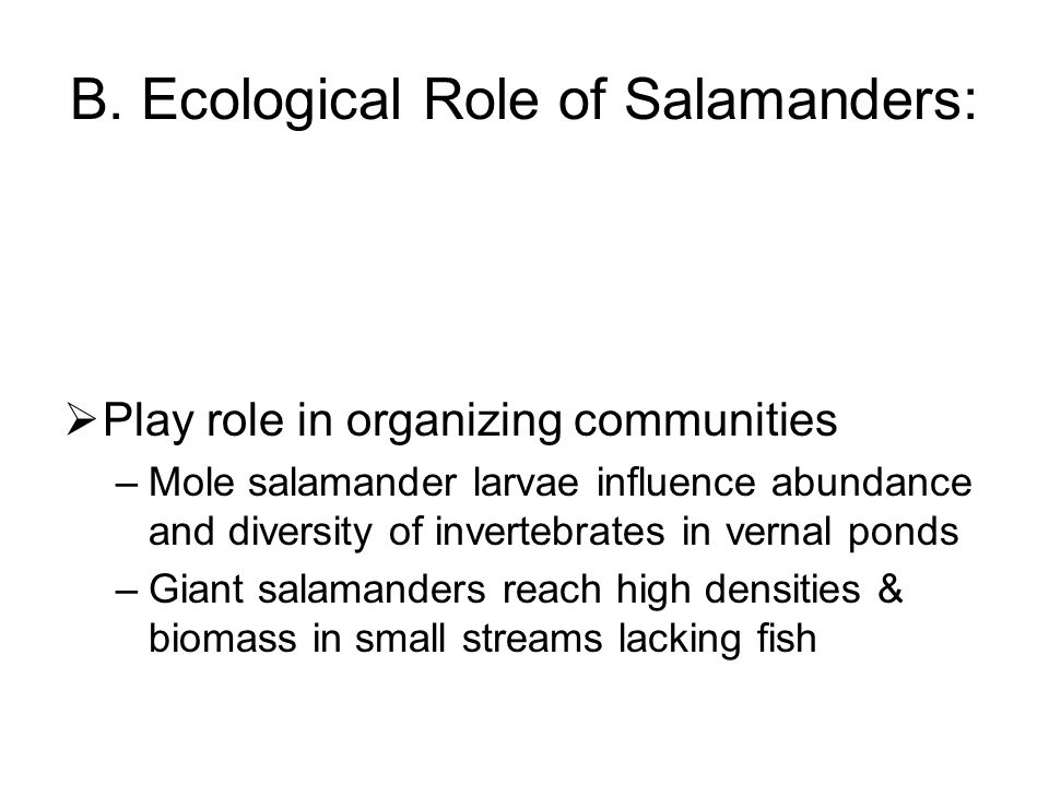 B. Ecological Role of Salamanders: