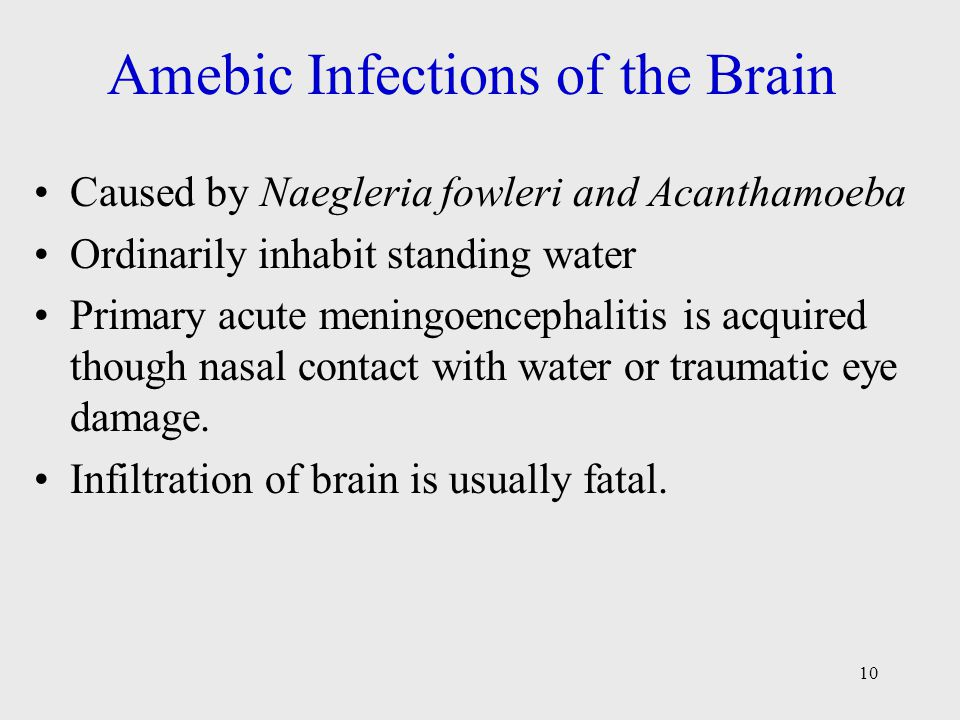 Amebic Infections of the Brain