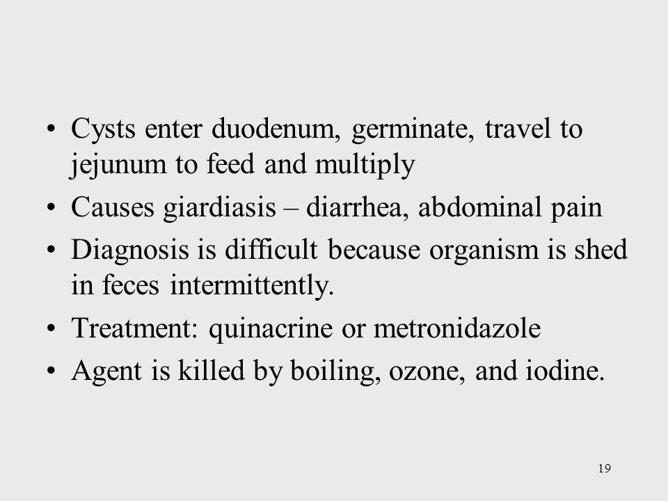 Cysts enter duodenum, germinate, travel to jejunum to feed and multiply