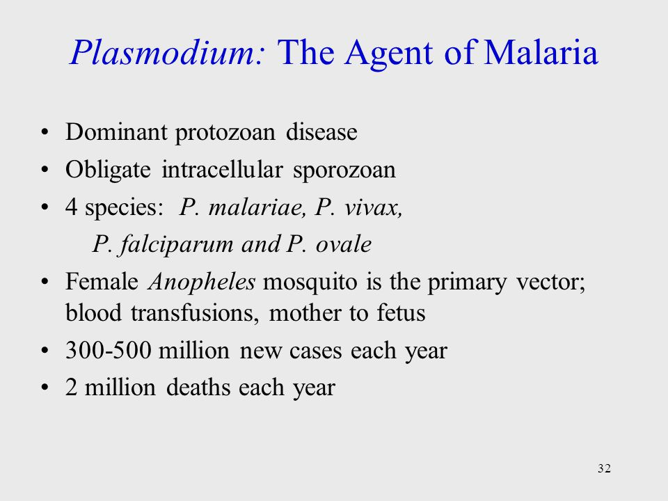 Plasmodium: The Agent of Malaria