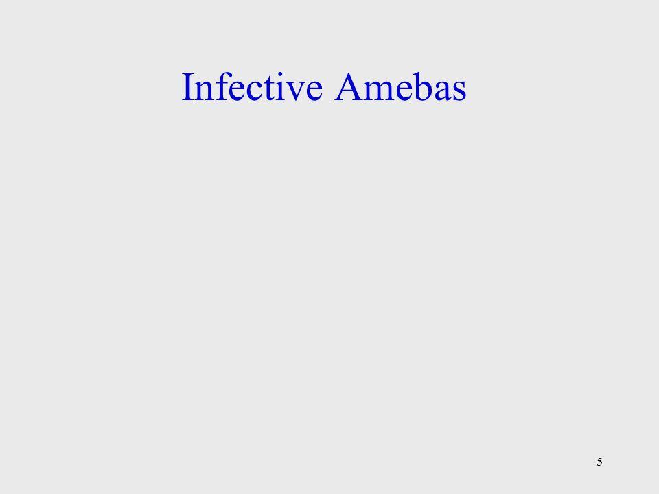 Infective Amebas