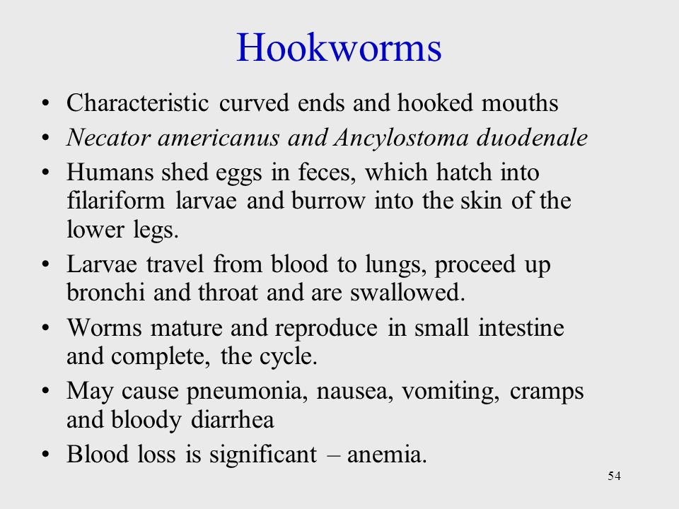 Hookworms Characteristic curved ends and hooked mouths