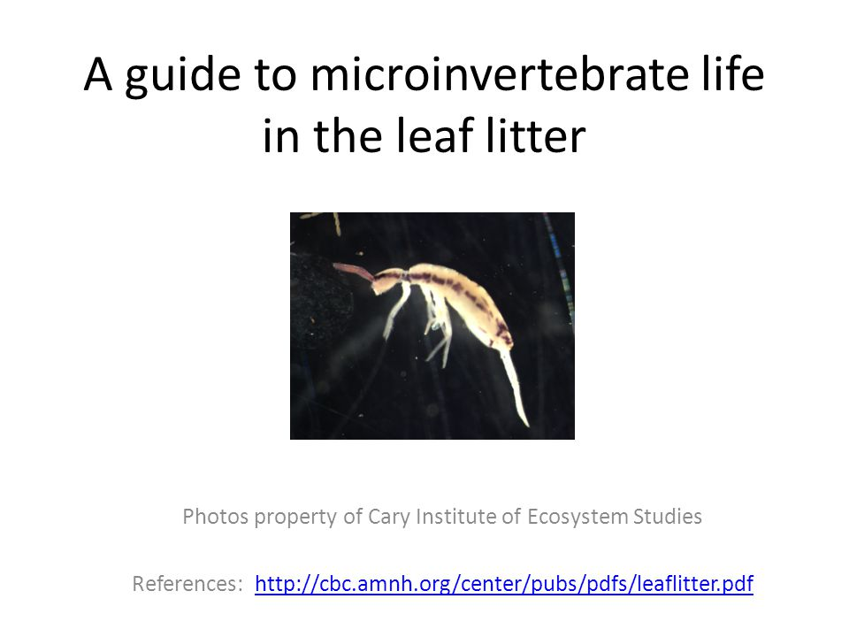 A guide to microinvertebrate life in the leaf litter