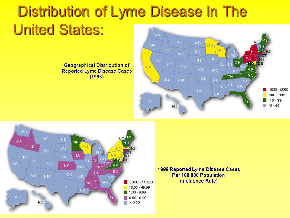 Distribution of Lyme Disease In The United States: