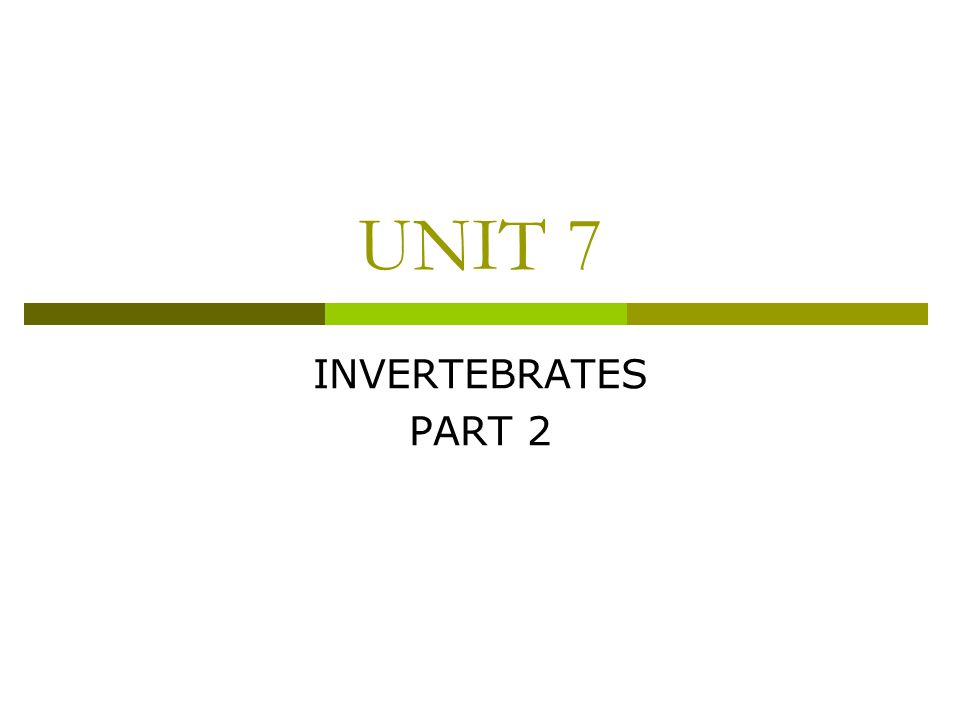 UNIT 7 INVERTEBRATES PART 2
