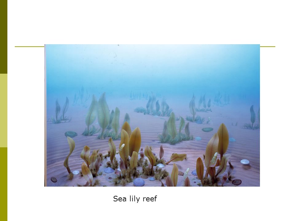 Sea lily reef
