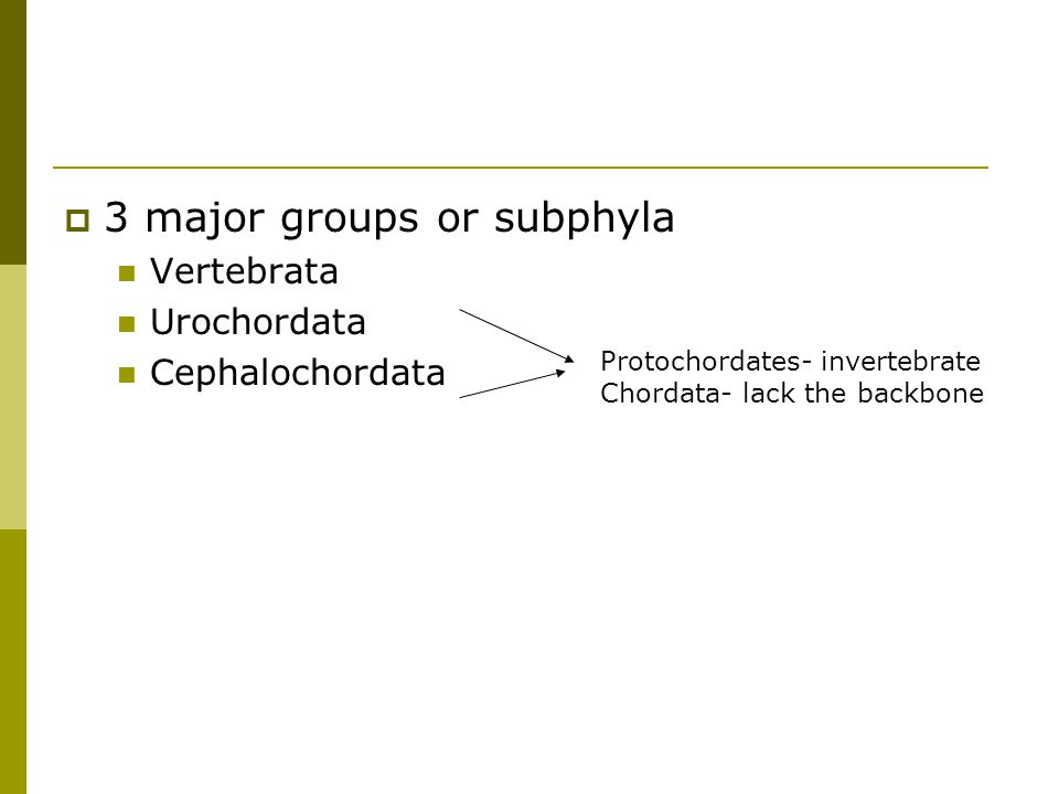 3 major groups or subphyla