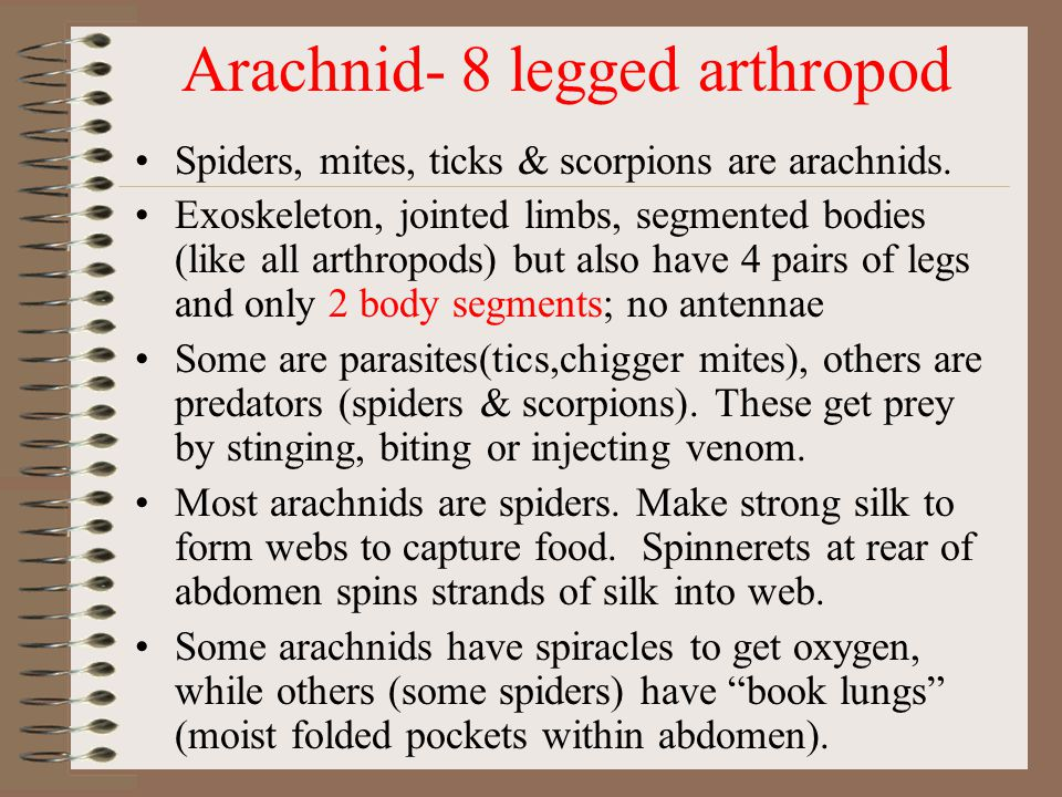 Arachnid- 8 legged arthropod