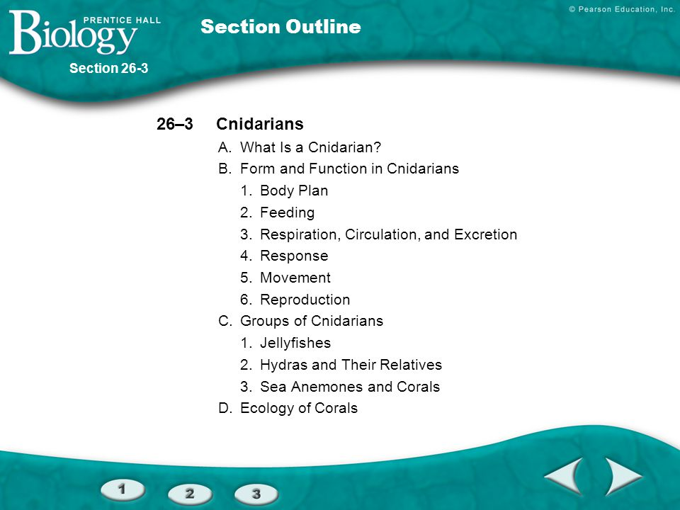 Section Outline 26–3 Cnidarians A. What Is a Cnidarian