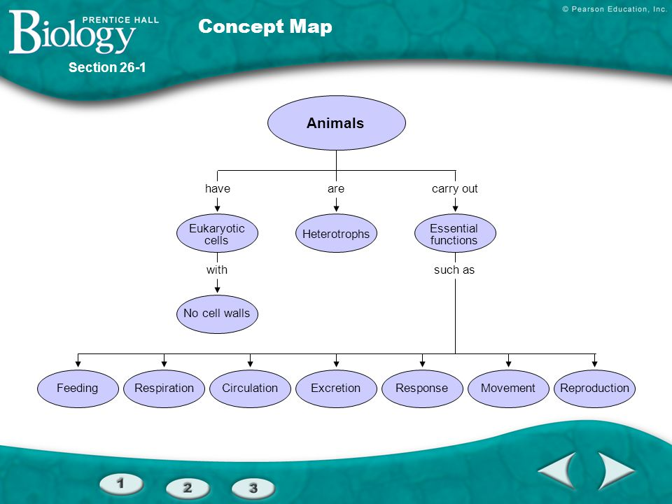 Concept Map Animals Section 26-1 have are carry out Eukaryotic cells
