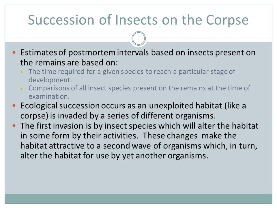 Succession of Insects on the Corpse