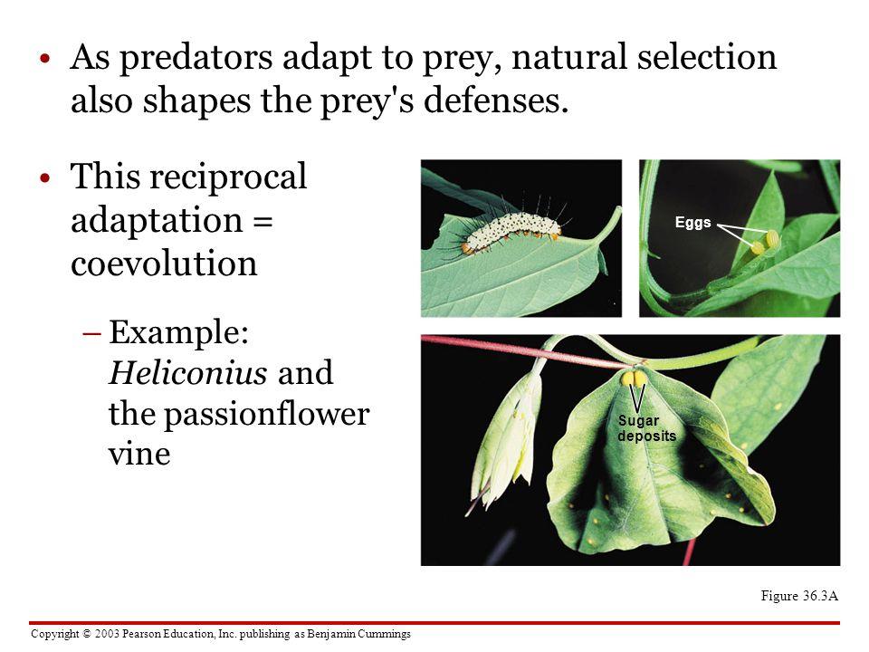 This reciprocal adaptation = coevolution