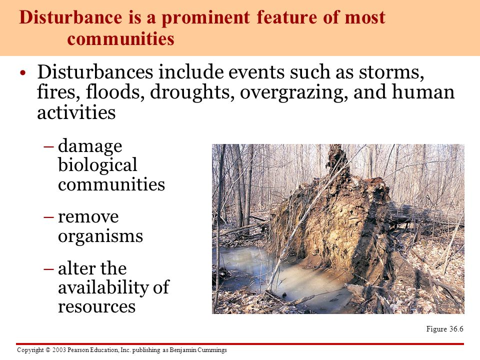 Disturbance is a prominent feature of most communities