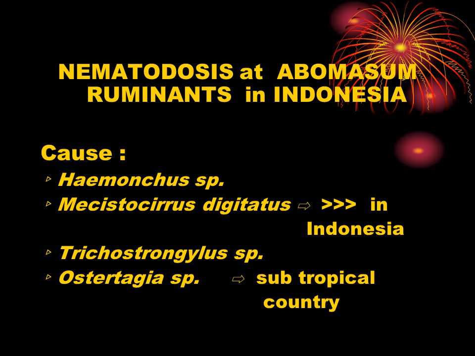 NEMATODOSIS at ABOMASUM RUMINANTS in INDONESIA