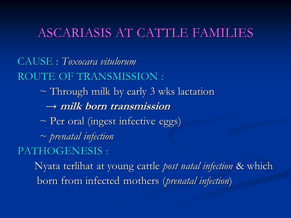 ASCARIASIS AT CATTLE FAMILIES