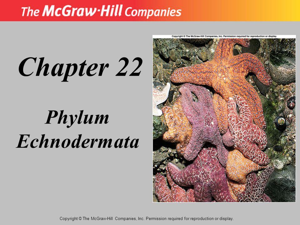 Chapter 22 Phylum Echnodermata