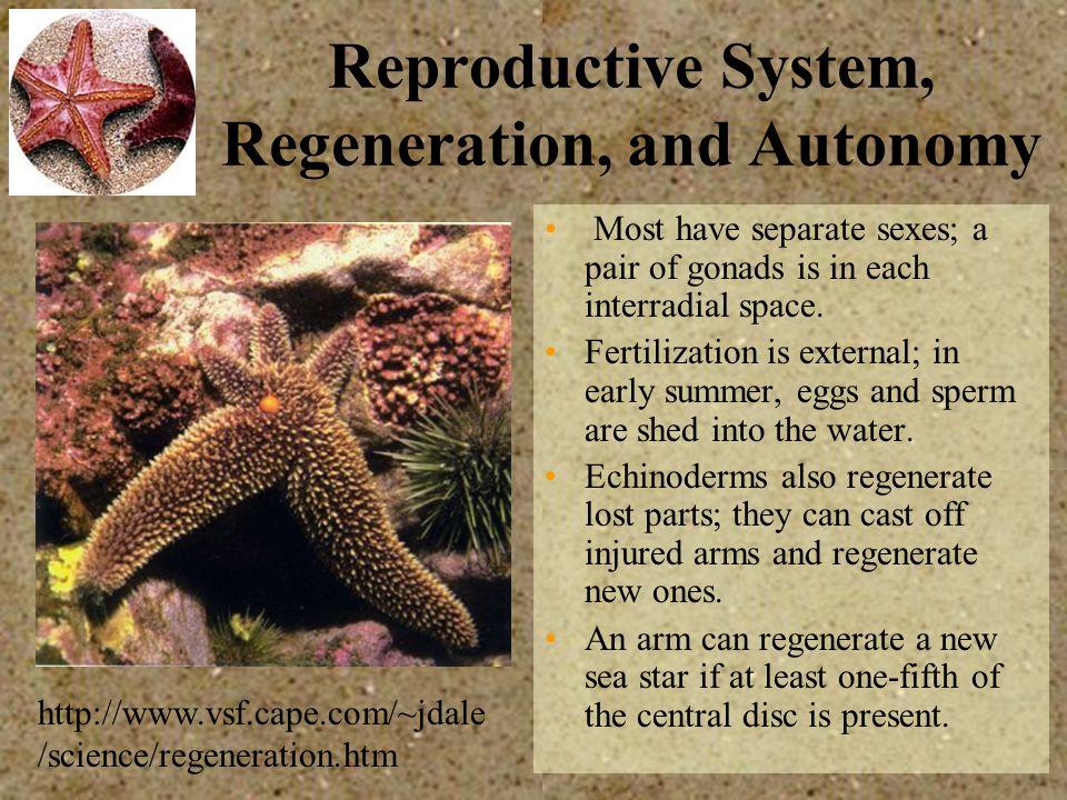 Reproductive System, Regeneration, and Autonomy