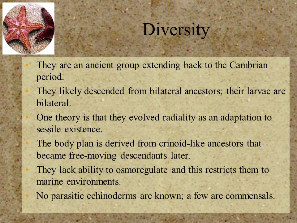 Diversity They are an ancient group extending back to the Cambrian period.