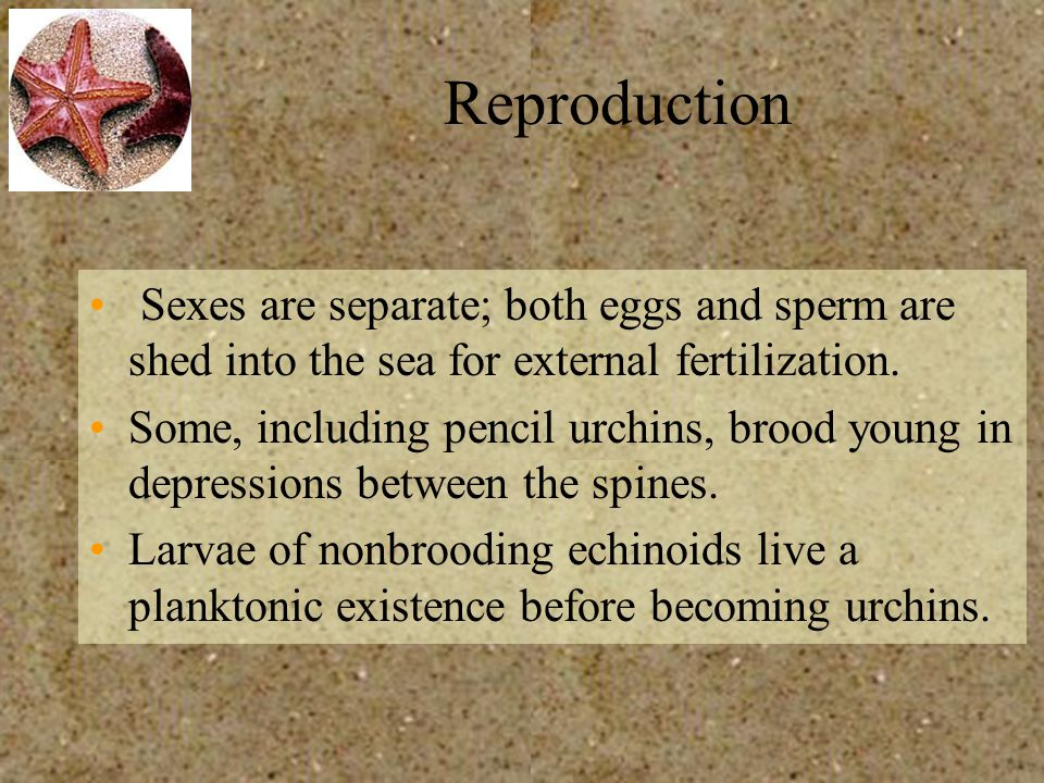 Reproduction Sexes are separate; both eggs and sperm are shed into the sea for external fertilization.