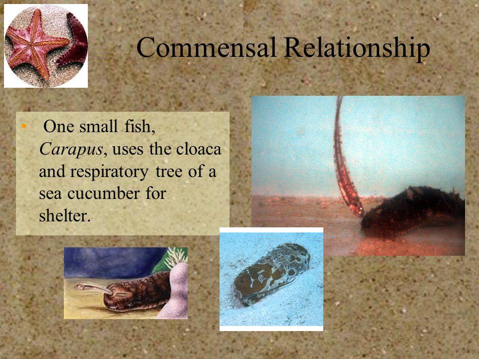 Commensal Relationship