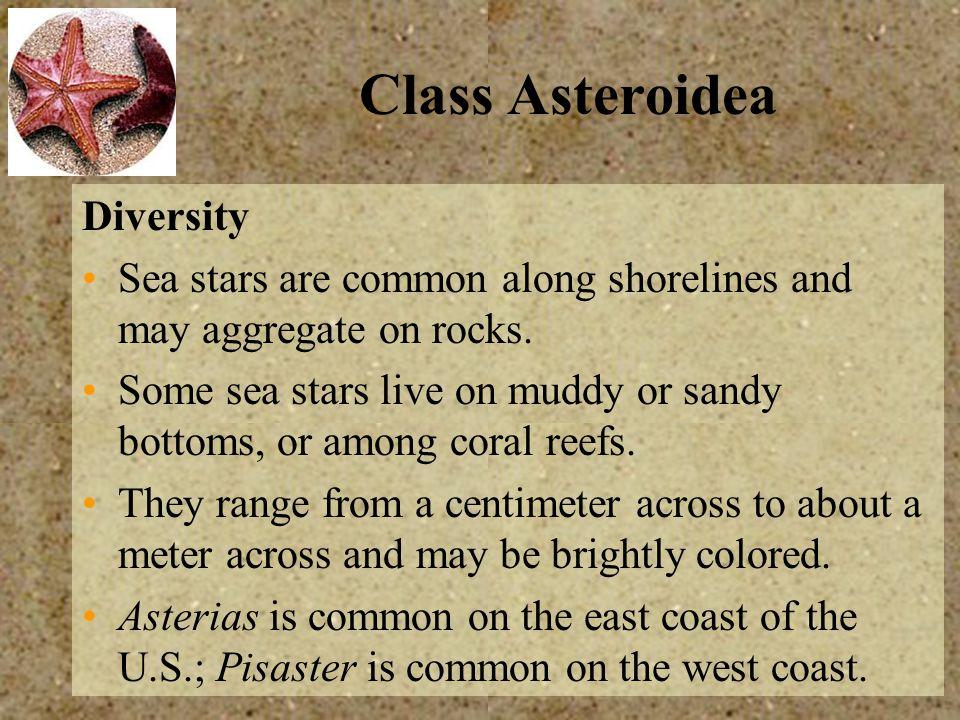 Class Asteroidea Diversity