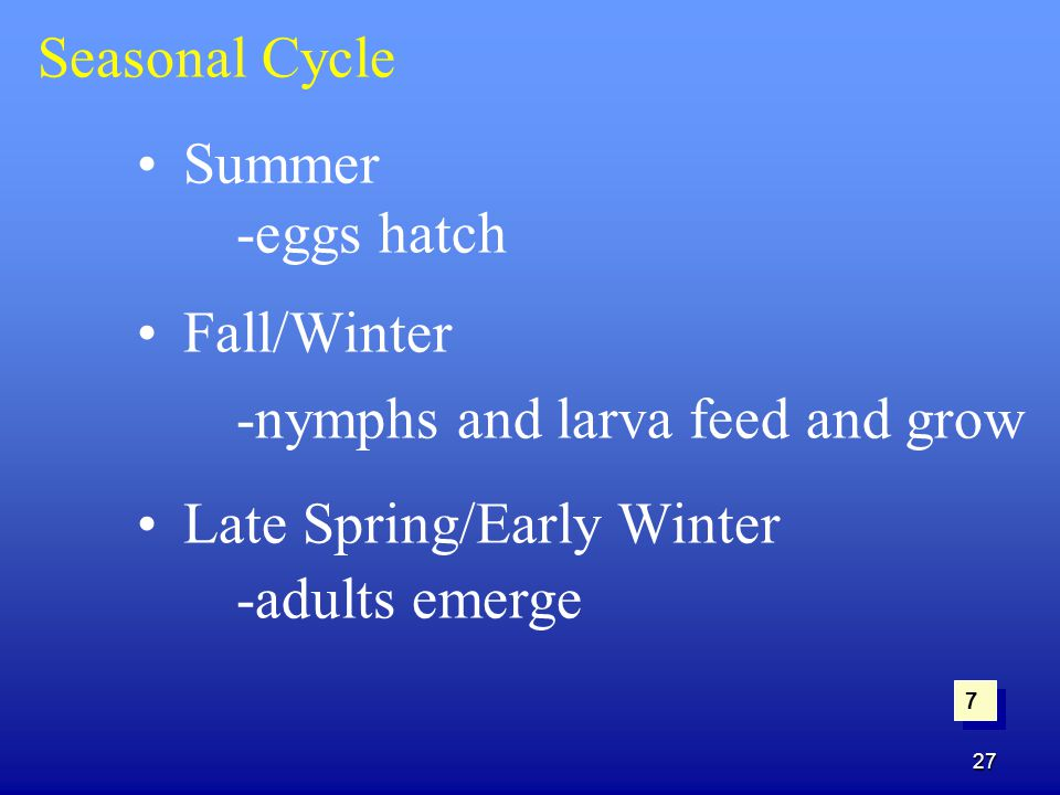 -nymphs and larva feed and grow Late Spring/Early Winter