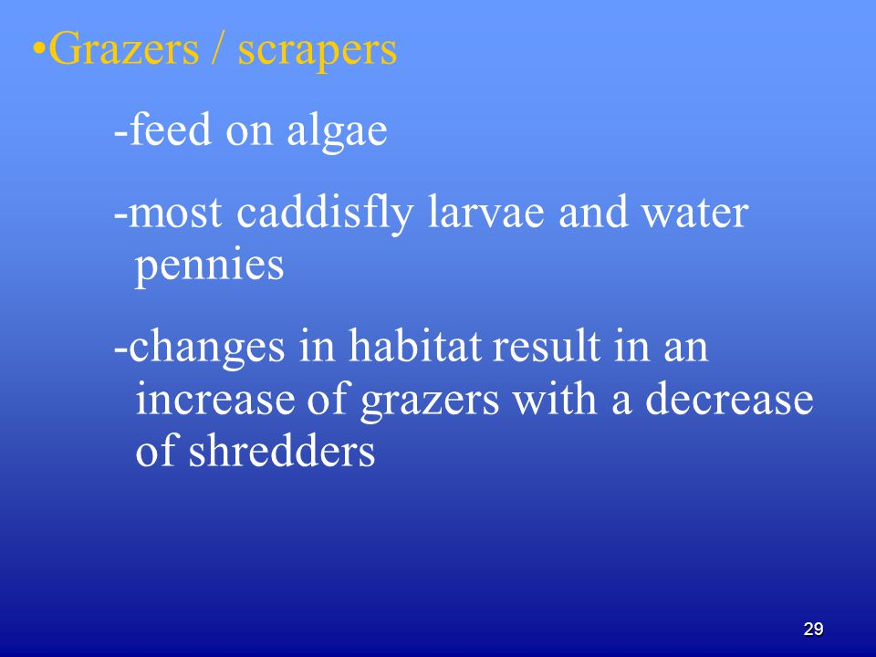Grazers / scrapers -feed on algae. -most caddisfly larvae and water pennies.
