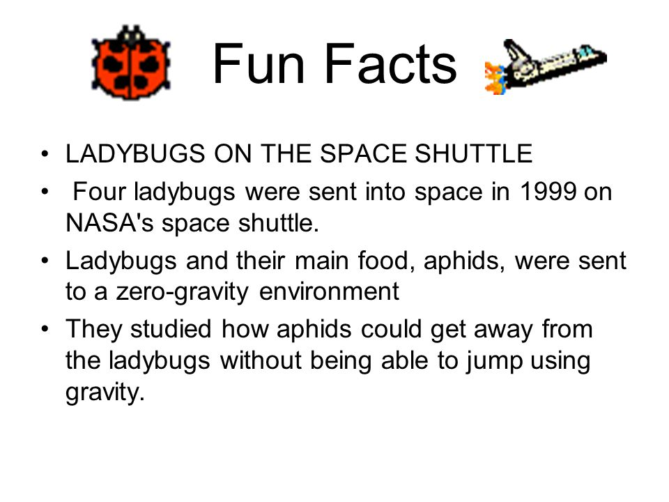 Fun Facts LADYBUGS ON THE SPACE SHUTTLE