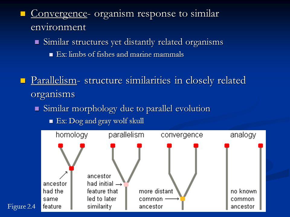 Convergence- organism response to similar environment