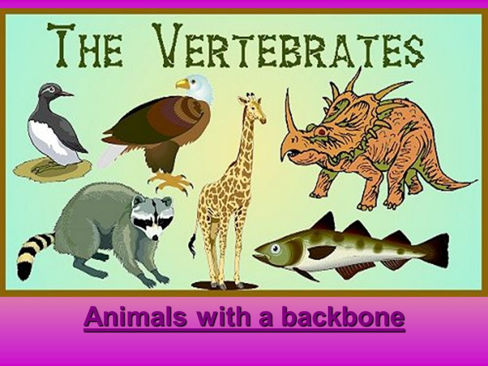 Animals with a backbone