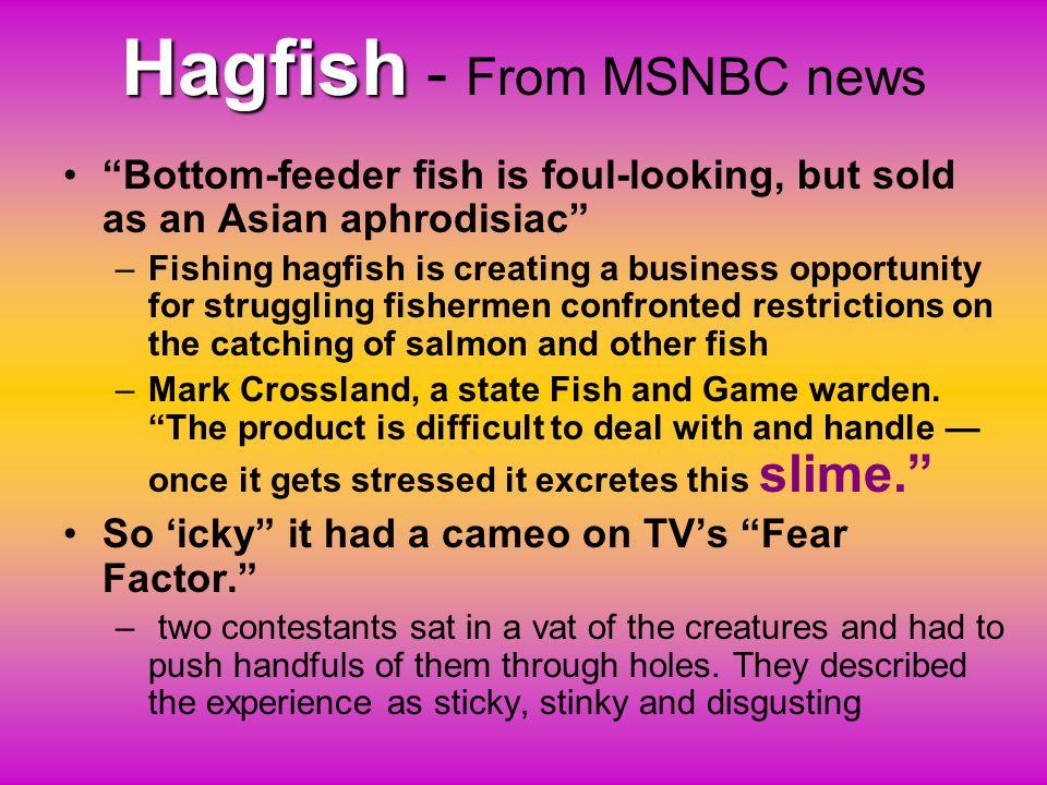 Hagfish - From MSNBC news