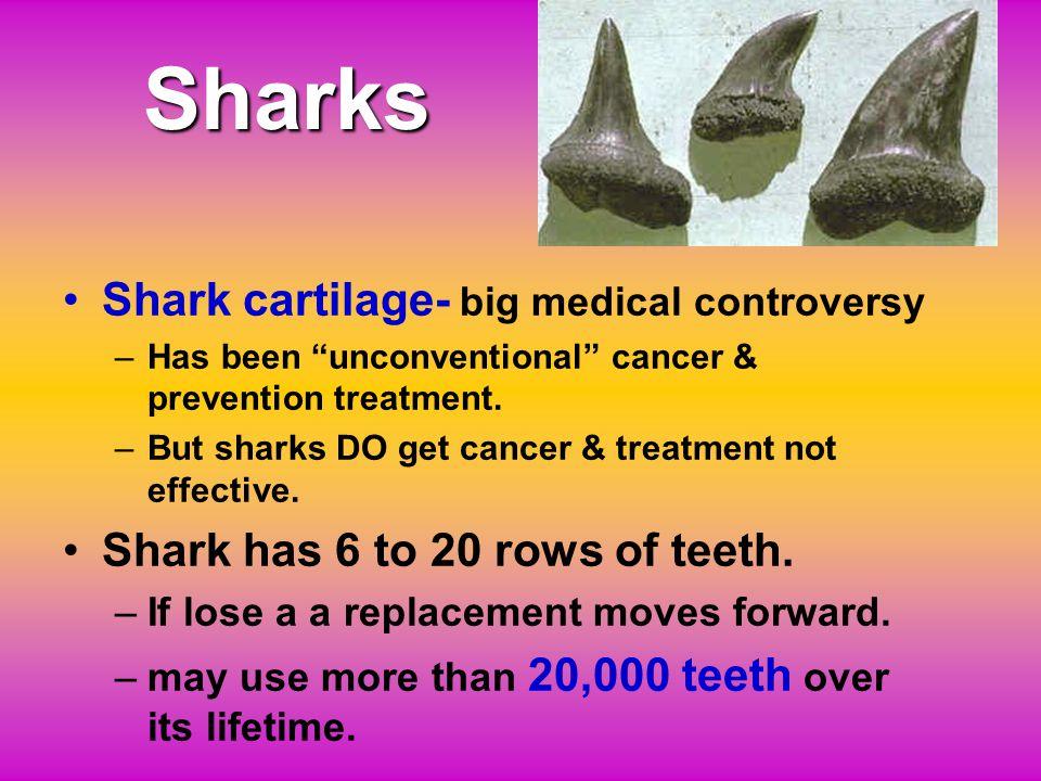 Sharks Shark cartilage- big medical controversy