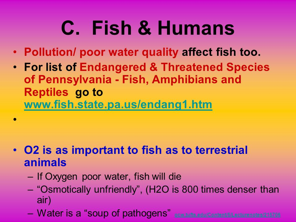 C. Fish & Humans Pollution/ poor water quality affect fish too.