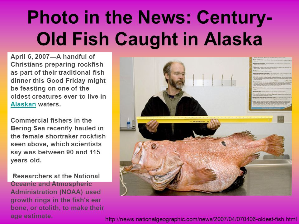 Photo in the News: Century-Old Fish Caught in Alaska