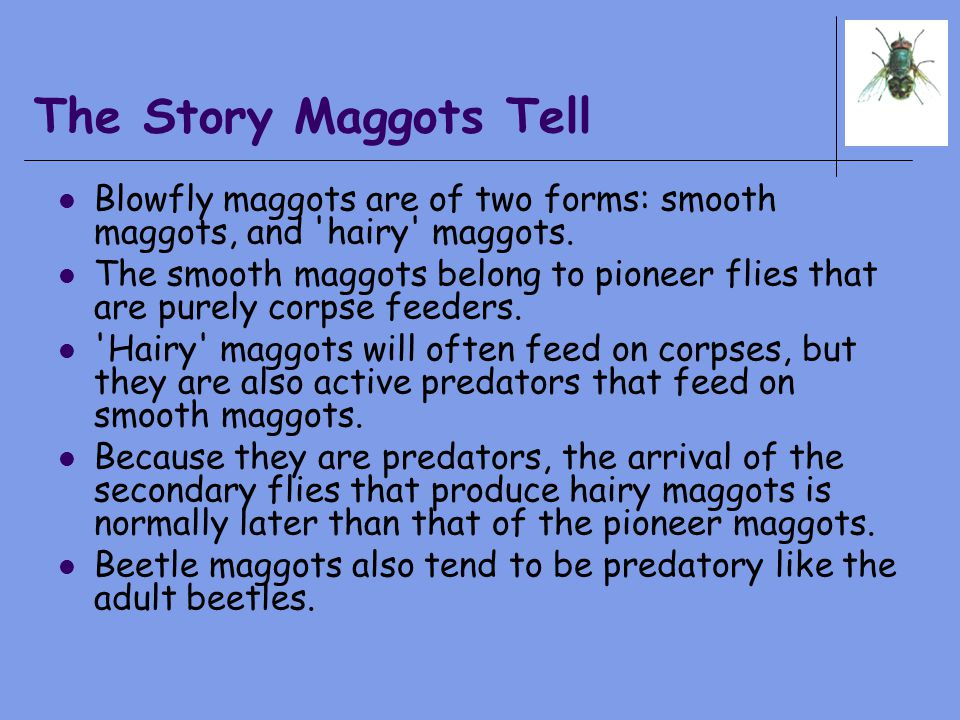 The Story Maggots Tell Blowfly maggots are of two forms: smooth maggots, and hairy maggots.