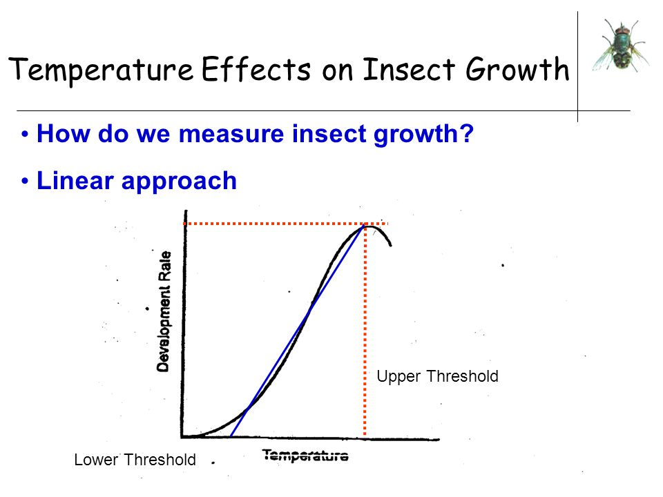 Temperature Effects on Insect Growth